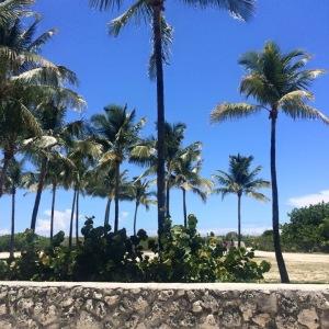 square palm